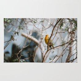 Yellow Wanderess Rug