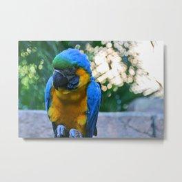 PB Macaw Metal Print