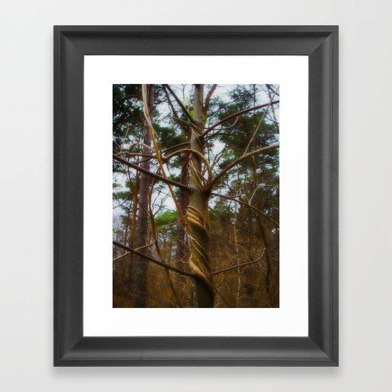 Tree Spiral Framed Art Print