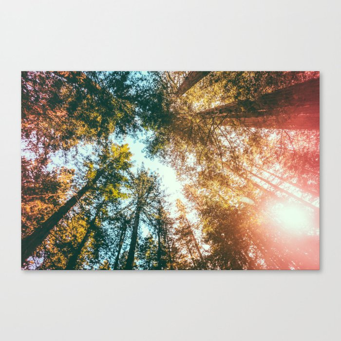 California Redwoods Sun-rays and Sky Leinwanddruck