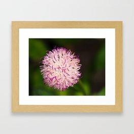 Lark Daisy - Wild Flower Series Framed Art Print