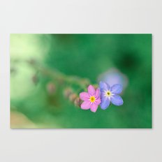 One Girl-One Boy, Forget-me-not Canvas Print
