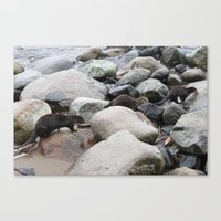 otters Canvas Prints featuring Wild otters by Joni
