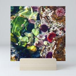 Tide Pool Hermanus, Western Cape, South Africa Mini Art Print