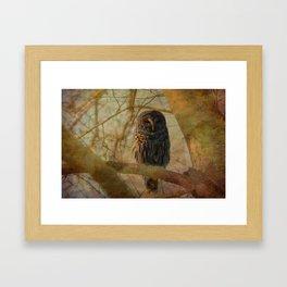 Barred Owl Framed Art Print