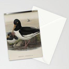 248 Haematopus ostralegus. Oyster catcher Stationery Cards