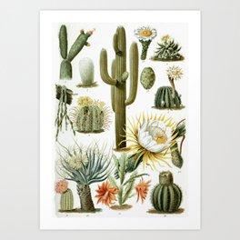 Cactaceae German Botanical Print from Brockhaus Encyclopedia Art Print