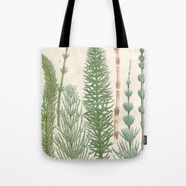 Botanical Horsetail Plants Tote Bag