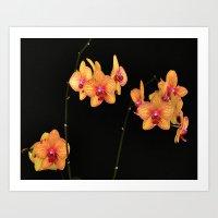 YELLOW AND FUCHSIA ORCHID Art Print