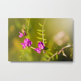 green branched tendrils of Vicia Metal Print