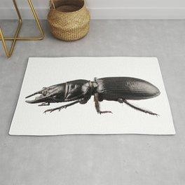 beetle species Lucanus cervusbeetle species Lucanus cervus Rug