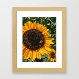 Sunflower and Honeybee Framed Art Print