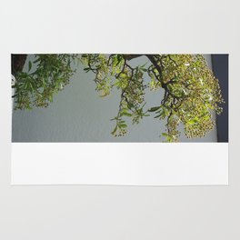 Bonsai Tree- Nepal Firethorn Rug