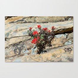 Rough Indian Paintbrush (Zion National Park, Utah) Canvas Print