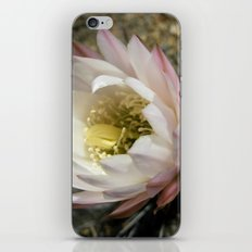 Cactu Flower iPhone & iPod Skin