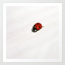 ladybug II Art Print