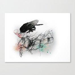 Fly Head Canvas Print