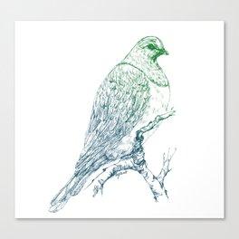 Mr Kereru, New Zealand wood pigeon Canvas Print
