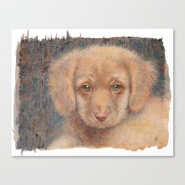 Retriever puppy Canvas Print