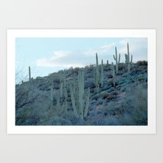 evening cactus Art Print