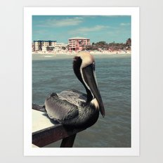 Florida Pelican Color Photo Art Print