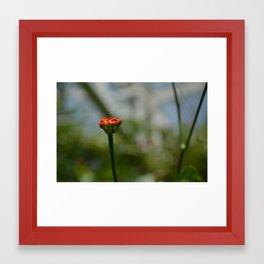 Tiny Orange Flower Framed Art Print