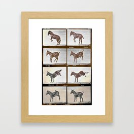 Muybridge Donkey  Framed Art Print