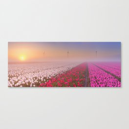 II - Sunrise and fog over rows of blooming tulips, The Netherlands Canvas Print