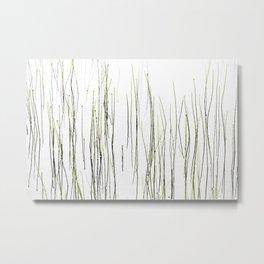 Cottongrass Metal Print