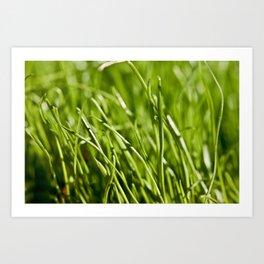 Fresh Summer Grass Art Print