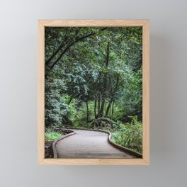 Moody Forest Trail . Adventure Nature Photography . Muir Woods, California Framed Mini Art Print