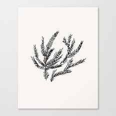 Summer Coral Fern Canvas Print