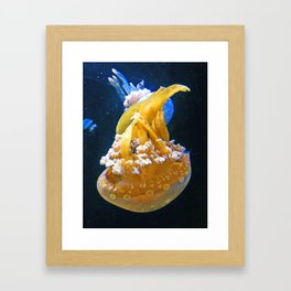 Jelly Fish, Pysgod Wibli Wobli Framed Art Print