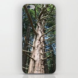 Looking upwards at tree iPhone Skin