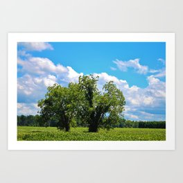Country Scenery Art Print