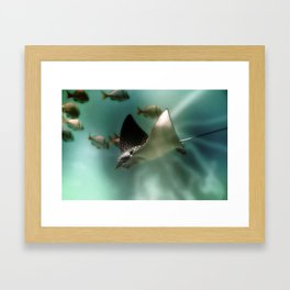 Majestic Flight of the Stingray Framed Art Print