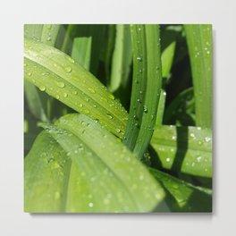 Summer Rain Metal Print
