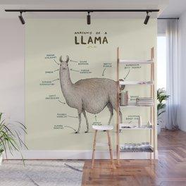 Anatomy of a Llama Wall Mural
