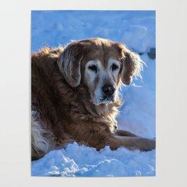 snow retriever Poster