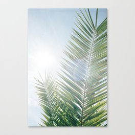 Another palm tree on another sunny morning Canvas Print