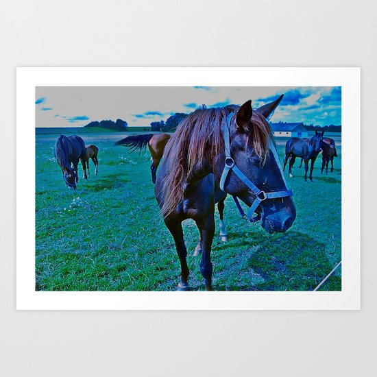 feed the horse Art Print