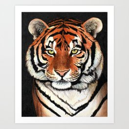 Tiger portrait drawing Art Print