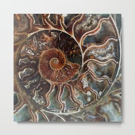 Fossilized Shell Metal Print