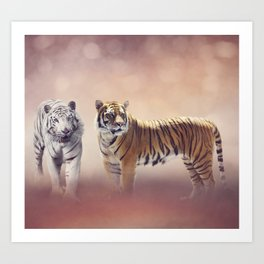 White And Brown Bengal Tigers Art Print