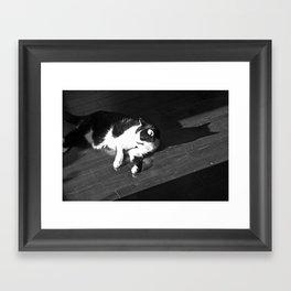 Relaxing Cat Framed Art Print