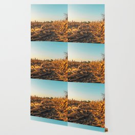 Corn field at sunset in the countryside of Lomellina Wallpaper