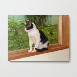 A cat on a window Metal Print