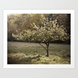 Apple Tree in Orchard Photograph Art Print