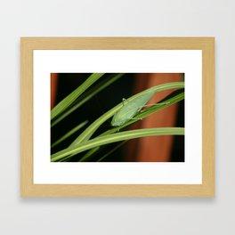 Bug 2 Framed Art Print