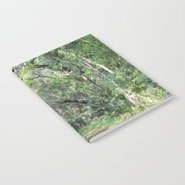 Hiking in Florida Notebook
